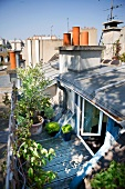 Blick auf moderne Dachterrasse mit Pflanzentöpfen vor offen stehenden Wohnraumtüren
