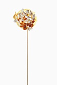 Popcorn lollipop