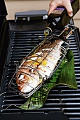 Red snapper being drizzled with olive oil on a grill