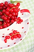 Red currants in a polka dot cup