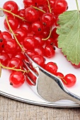 Red currants with a fork (close up)