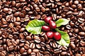 Kaffeebohnen, frisch und geröstet
