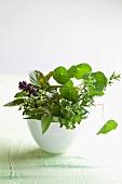 Garden herbs in a vase