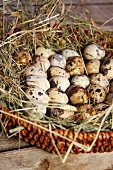 Quail's eggs in a basket
