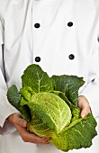 A chef holding a fresh savoy cabbage