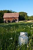 A milk churn in a field