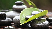 Nasse Steine und Blätter