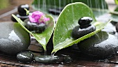 Stones, bougainvillea flowers and leaves in the rain
