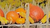 Herbstliches Stillleben mit Kürbissen und Maiskolben