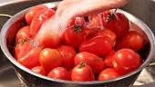 Tomaten unter fliessendem Wasser waschen