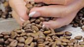 Weibliche Hand mit Kaffeebohnen