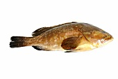 A brown grouper