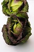 Two savoy cabbages