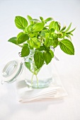 Basil and stevia