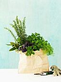 Fresh herbs in a paper bag