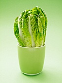 Cos lettuce in a green cup