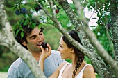 Couple by plum tree, woman feeding man plum