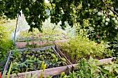 Gemüsebeete, teilweise mit Netzen abgedeckt, im Garten