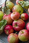 Fresh apples with twigs and leaves