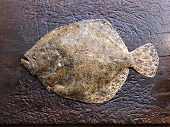 A fresh turbot (seen from above)