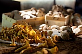 Fresh mushrooms: porcini mushrooms and chanterelle mushrooms