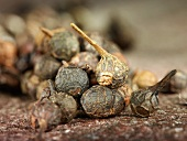 Cubeb (also known as tailed pepper)