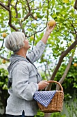 An older woman picking lemons