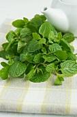Fresh mint for mint tea