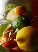 Zitrusfrüchtestilleben (Nahaufnahme)