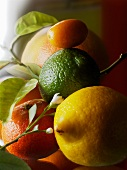 An arrangement of citrus fruits (close-up)