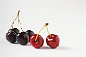 Black and red cherries with water droplets, close-up