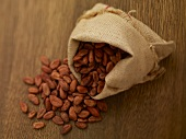 Cocoa beans in a jute sack
