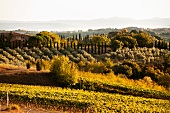 A beautiful Tuscan landscape in south Chianti Classico