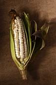 A Peruvian corncob