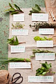Various fresh herbs and their Latin names