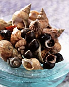 Common whelks and periwinkles