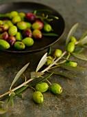 Branch of Fresh Green Olives; Bowl of Olives