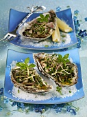 Oysters with shallot pesto for Christmas dinner