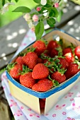 Fresh strawberries in punnets
