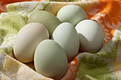 Fresh Araucana Eggs