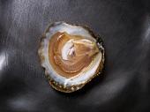 Eine Prat arcoum-Auster