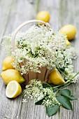 Elderflowers in woodchip baskets with fresh lemons