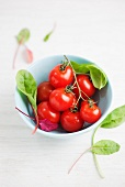 Vine tomatoes and delicate lettuce leaves