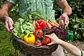 A father carrying a basket of freshly harvested vegetables and his daughter reaching for a tomato
