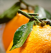 Oranges with stems and leaves (close-up)