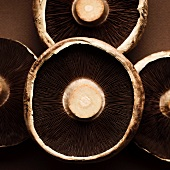 The undersides of portobello mushrooms (close-up)