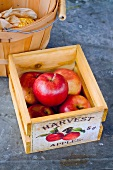 Apples in a Crate