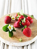 Fresh strawberries and strawberry flowers