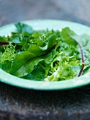 Close up of plate of mixed greens