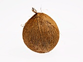 Eine Kokosnuss auf weißem Grund